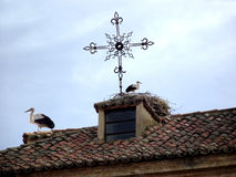 Storks on the roof of a rustic house Royalty Free Stock Photos