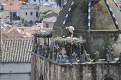 Storks on the Roof. Storks in their nest on a church tower Stock Photography