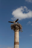 Storks on the ruins Volyubilisa.Marokko. Stock Images