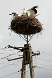 Storks sit in the nest on a pole Royalty Free Stock Image