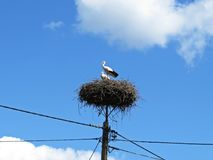Storks Sitting on a Nest with Clouds on the Sky in Background royalty free stock photos