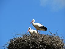 Storks Sitting on a Nest with Clouds on the Sky in Background stock photo