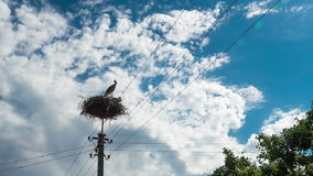 Storks sitting in a nest on a pillar high voltage power lines. time lapse stock video