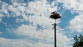 Storks Sitting in a Nest on a Pillar High Voltage Power Lines. Time Lapse. Stork and his chick are high above the earth in the nest. Three Storks live in nest stock footage