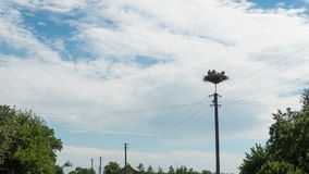 Storks Sitting in a Nest on a Pillar High Voltage Power Lines in Village. Time Lapse. Stork and his chick are high above the earth in the nest. Three Storks stock video