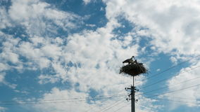 Storks sitting in a nest on a pillar and moving clouds in a blue sky. Time lapse. Stork and his chick are high above the earth in the nest stock video footage