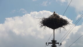 Storks are Sitting in a Nest on a Pillar. Several storks sitting in a nest on a pillar high voltage power lines. Stork and his chick are high above the earth stock footage