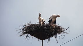 Storks are Sitting in a Nest on a Pillar. Several storks sitting in a nest on a pillar high voltage power lines. Stork and his chick are high above the earth stock video footage
