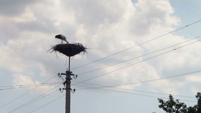 Storks are sitting in a nest on a pillar. Several storks sitting in a nest on a pillar high voltage power lines. Stork and his chick are high above the earth in stock video footage