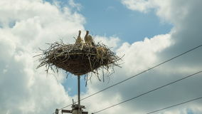 Storks are Sitting in a Nest on a Pillar. Time Lapse. Storks are Sitting in a Nest on a Pillar. Timelapse. Several storks sitting in a nest on a pillar high stock footage