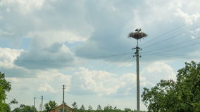 Storks are Sitting in a Nest on a Pillar. Time Lapse. Storks are Sitting in a Nest on a Pillar. Timelapse. Several storks sitting in a nest on a pillar high stock video footage