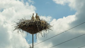 Storks are Sitting in a Nest on a Pillar. Time Lapse. Storks are Sitting in a Nest on a Pillar. Timelapse. Several storks sitting in a nest on a pillar high stock video