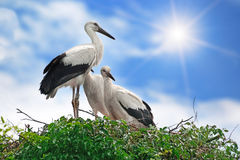 Storks on the sky background Royalty Free Stock Photos