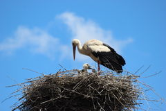 Stork Nest. A stork nest during a sunny summer day stock photos