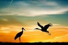 Storks at sunset. Illustration of storks at sunset Stock Images