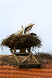 Storks in their nest Stock Image