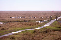 Storks in the thurm cap of St. Peter-Ording Stock Photo
