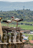Storks in Trujillo Extremedura Spain Royalty Free Stock Image