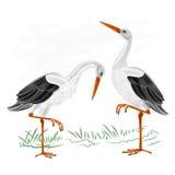 Storks water bird vector. Storks white wild water bird vector illustration Stock Photos
