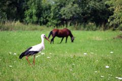 A storks and a haystack. Village. Daylight. Summer photography. royalty free stock photos