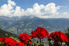 Storksbills in Süd-Tirol, Italien Lizenzfreies Stockbild