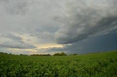Storm över fält Arkivfoto