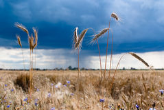 Before the storm Stock Photography
