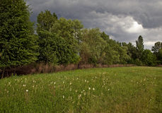 Before the storm. Meadows with flowers in a summer day. Dark gloomy sky with clouds before storm royalty free stock images