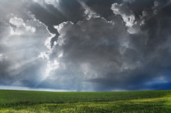 Storm. Storm clouds over field with green grass Royalty Free Stock Images