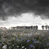 Storm. Royalty Free Stock Photo