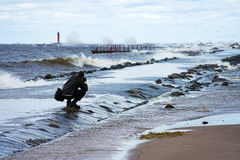 Storm. Photographer and stormy winter sea Royalty Free Stock Photo