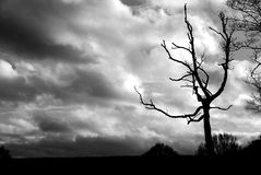 Storm. Brewing storm with dead tree Royalty Free Stock Photo