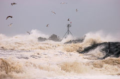 Storm. Seagulls flying in a storm royalty free stock images