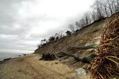 After storm. Erosion of Baltic coast due to the storms and climate change Royalty Free Stock Photography