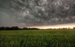 Storm above a field. The image shows an aproaching storm stock photos