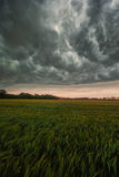 Storm above a field. The image shows an aproaching storm royalty free stock image