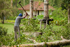 Storm aftermath. BALI - JANUARY 25. Man cleaning fallen tree after big storm on January 25, 2012 in Bali, Indonesia. Seven people died by falling trees that day Royalty Free Stock Photos