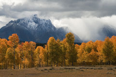 Storm, Aspens and Tetons. Storm and Aspens over the Tetons Royalty Free Stock Photo