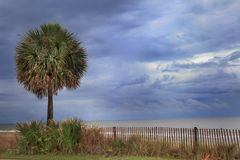 Storm at the Beach. Palm tree at the beach Stock Images