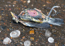 Storm, big ice hail killed little birdie. Royalty Free Stock Image