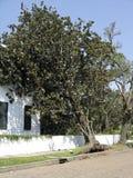 Storm blåst trädbenägenhet på hus Arkivfoton