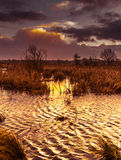 Storm brewing across marshes and lake Stock Image