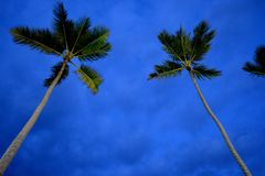 Storm Brewing. Dark skies with palm trees Royalty Free Stock Photos