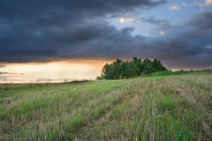 Storm cloud over oat field and trees. rural landscape Stock Photo