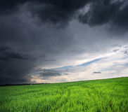 Storm clouds. Background of sky and grass green field Stock Photos