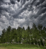 Storm clouds. Here is a trees under the storm Royalty Free Stock Images