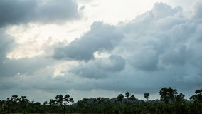 Storm clouds above tropical jungle. Footage stock footage