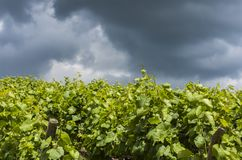Storm Clouds Vineyard. Storm Clouds above vineyard in the Champagne districht near Epernay, France Stock Photos