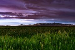 Storm clouds appearing over the fields. Royalty Free Stock Image