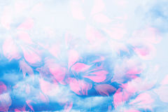 Storm clouds and flower petals. Computer collage photos and painting. Stock Photography